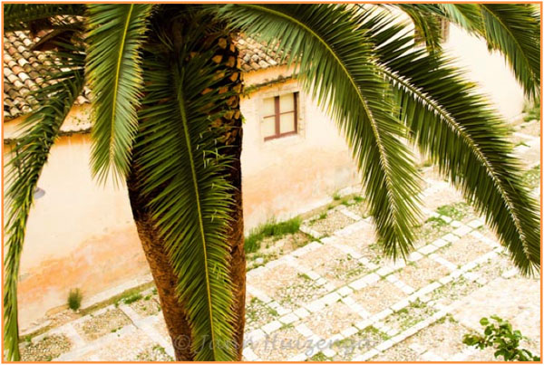 Palm Tree and Cobbled Courtyard, Sicily, copyright Jann Huizenga