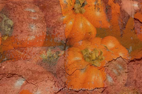 Photoshopped image of Tomatoes on Wall, copyright Jann Huizenga