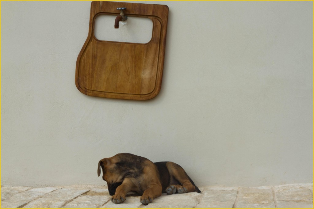 Dog against white wall in Sicily, copyright Jann Huizenga