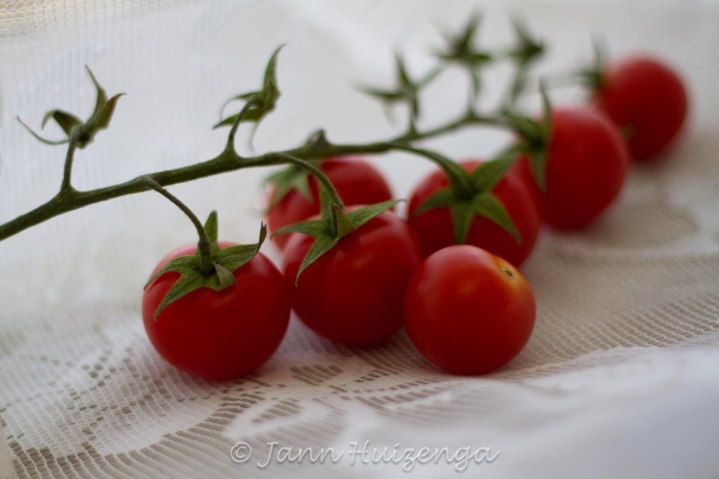 Tomatoes on a Vine, copyright Jann Huizenga