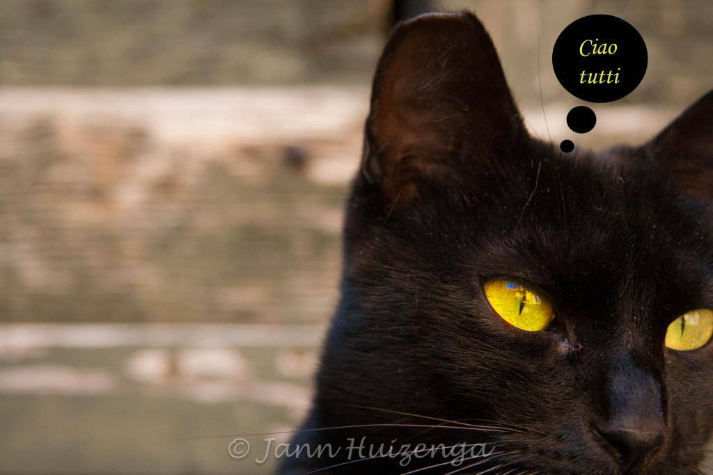 Black Sicilian Cat, copyright Jann Huizenga