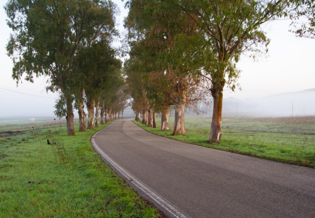 Sicilian Road in December Fog, copyright Jann Huizenga
