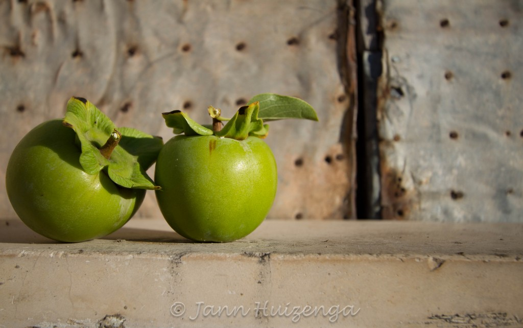 Persimmons on Sicilian Walls, Copyright Jann Huizenga