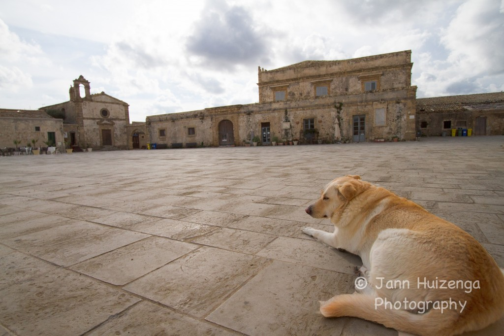 Dog in Marzamemi, Sicily, copyright Jann Huizenga