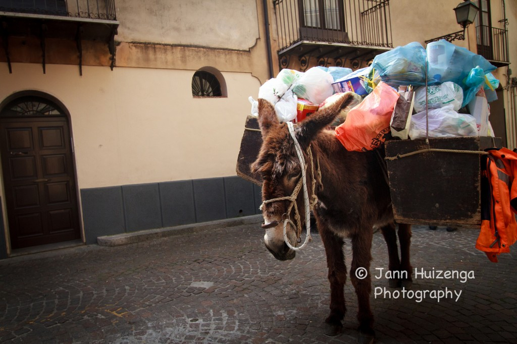 Trash-Collecting Donkey in Sicily, copyright Jann Huizenga